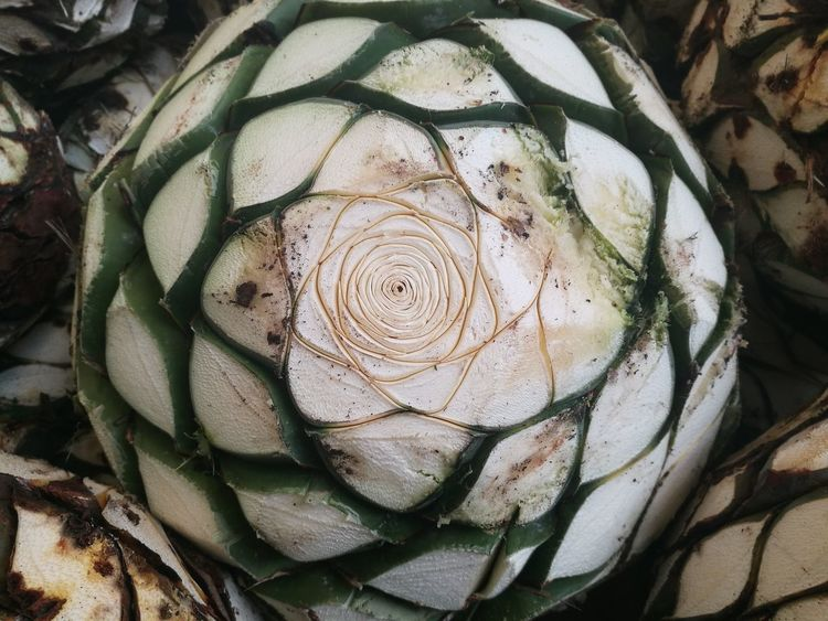 Pattern Concentric Close-up Full Frame Spiral Day Outdoors Nature Agaveplant Agave Almost Tequila Art Is Everywhere Perspectives On Nature