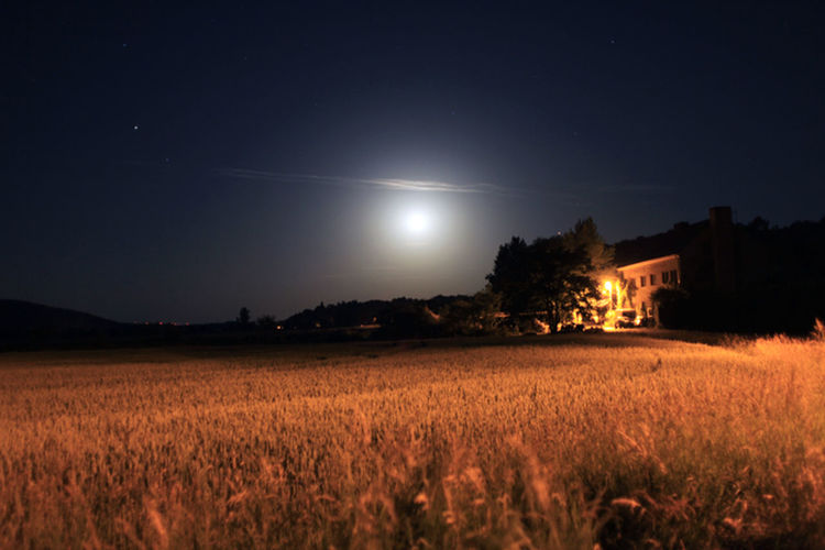 Scenic view of agricultural field against clear sky at night