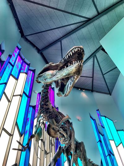Dinosaur Skeleton IPhoneography Science Museum  Sciences Paleontology Dinosaur Dinosaur Bones Low Angle View No People Architecture Built Structure Day Indoors  Building Ceiling Multi Colored Decoration Blue Tilt Nature