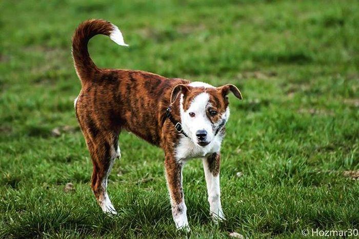 Seattlecola Dogsofinstagram Dogstagram Dog