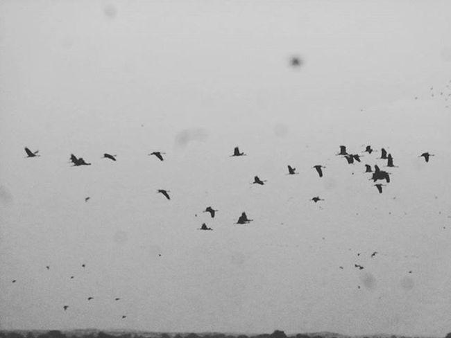 Bird family Bird Birds Birdgang Birdsofinstagram Lake Instagram Instalike Wonderer _soi Igersoftheday_ Like4likes Like4like Likeforlike Igers Instadaily Flying Naturelovers Jorney Lonelyplanetindia Lonelyplanet Ig_gujarat Followme