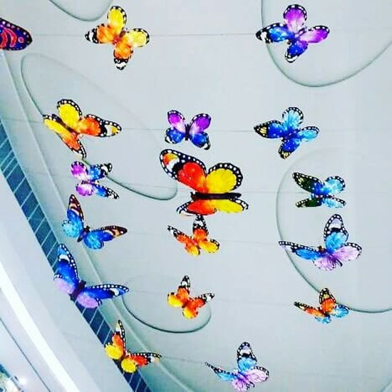 Fly...Just Fly My Lovely Butterfly...😊😉😍😎