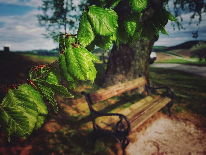 Growth Green Color Leaf No People Nature Focus On Foreground Plant Outdoors Day Tree Beauty In Nature Close-up Freshness Bench Leicacamera EyeEm Selects