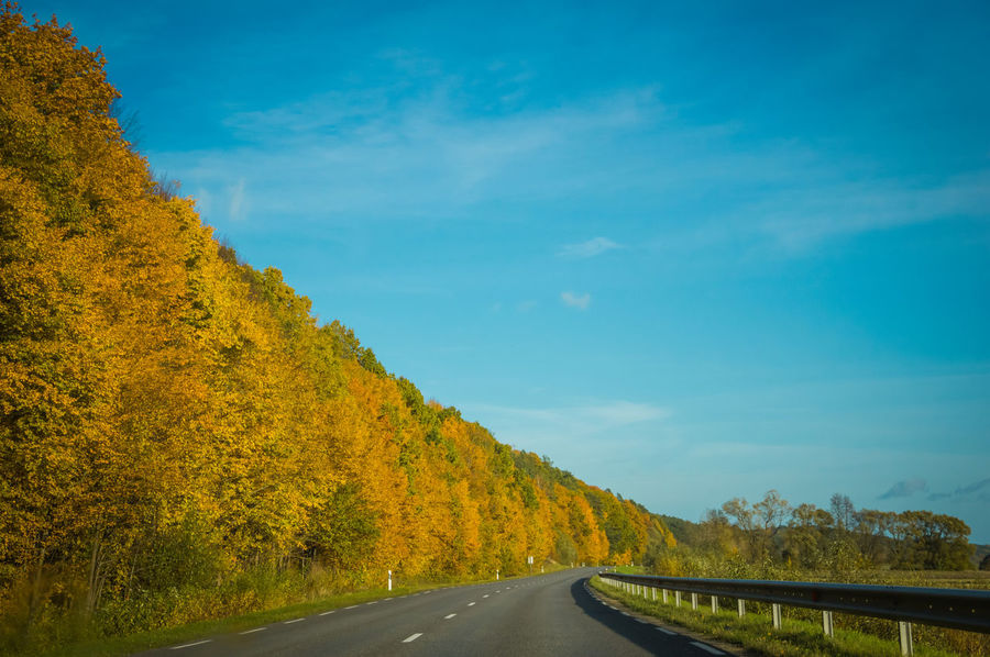 Road Beauty In Nature Scenic View Scenic Road Golden Trees Trees Autumn Autumn colors Fallseason Fall Seasons Lithuanian Nature Lithuanian Scenery Lithuania On The Road Traveling Country