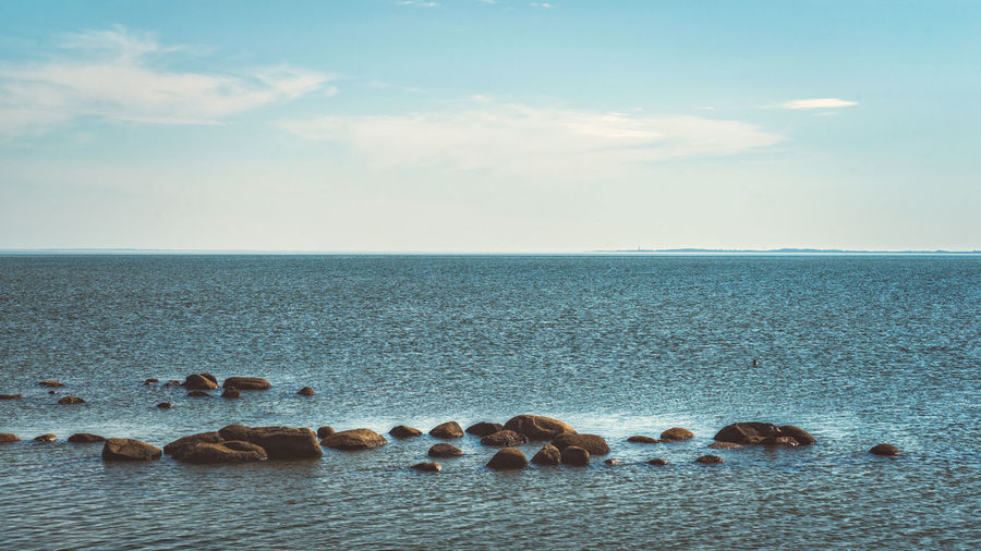 Animal Wildlife Animals In The Wild Beach Beauty In Nature Cloud - Sky Day Group Of Animals Horizon Horizon Over Water Land Large Group Of Animals Nature No People Scenics - Nature Sea Sky Tranquil Scene Tranquility Water