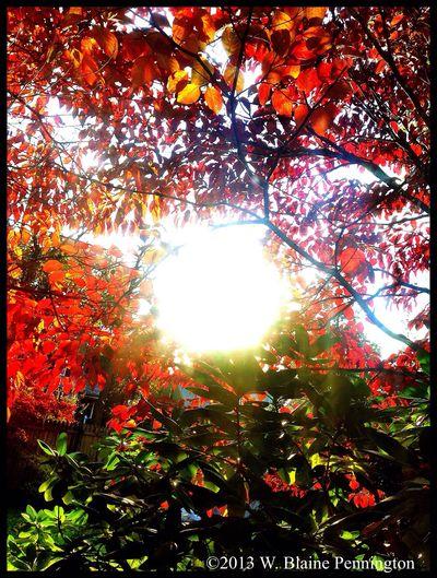 Good Morning, Beautiful Sun Fall Morning Autumn Trees