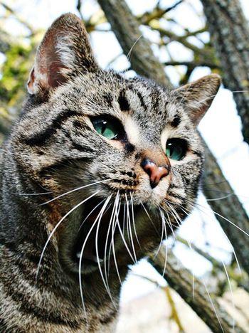 Cat Animal Green Eyes