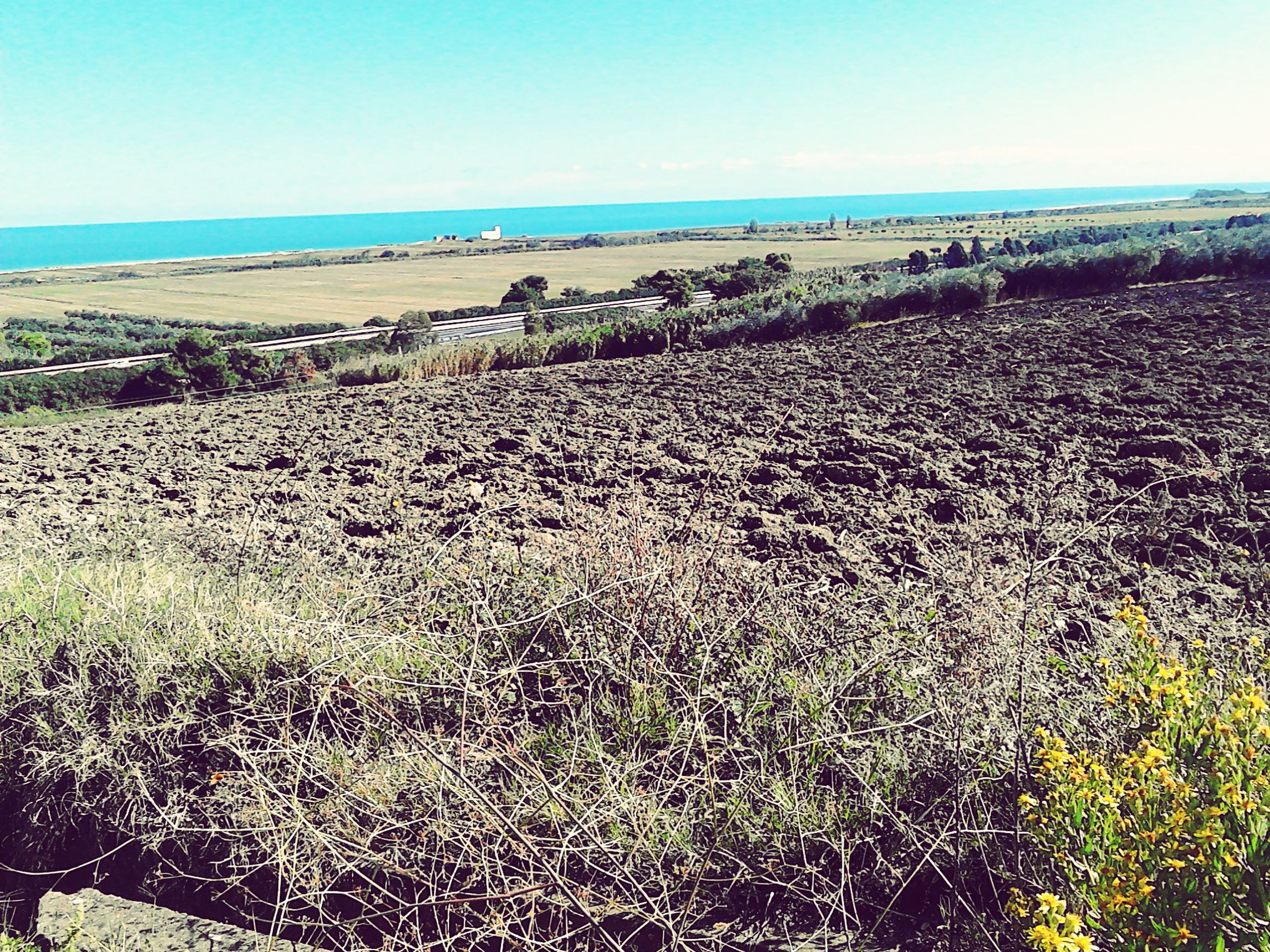 horizon over water, sea, beach, tranquil scene, tranquility, scenics, water, beauty in nature, clear sky, nature, plant, growth, sky, shore, sand, landscape, field, day, idyllic, outdoors