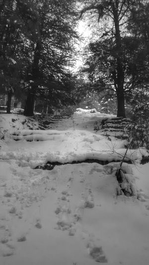 Snow❄⛄ Snowy Forest Landscapes With WhiteWall Solitude By The Snow Mystic No People , WINTER