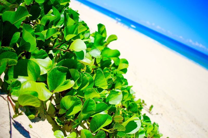MyFavorite  Sky Day Nature Leaf Green Color Blue Plant Water Freshness Beauty In Nature Beach Queensland Summer Sunny Day Holiday Clear Sky Canon Lovecamera_photo Australia Beach Life GoldCoast Beautiful Nature Sea