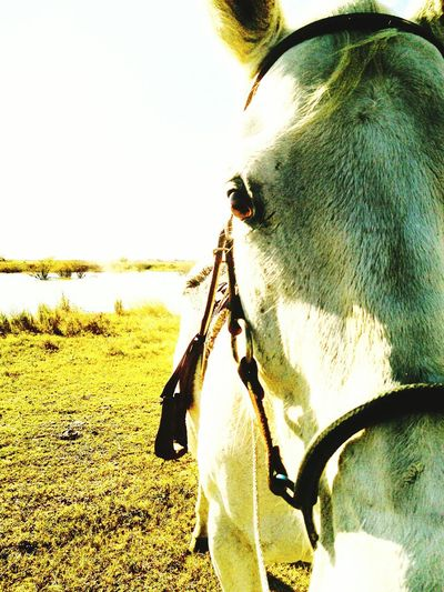 Showcase: December Mr. Heavenly Up Close And Personal Quarter Horse Animal_collection Animal Photography