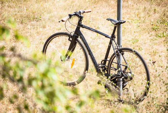 Bikelove Summer Sunshine Celebrate Your Ride