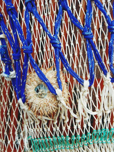 Animal Themes Animals In Captivity Animals In The Wild Backgrounds Blue Cage Close-up Full Frame Showcase March Multi Colored No People Pattern Rope Wildlife Sea Urchin Fishing Net Sea Theme Sea Food Caught Sea Urchins Sea Urcin Sea Urchin Shells