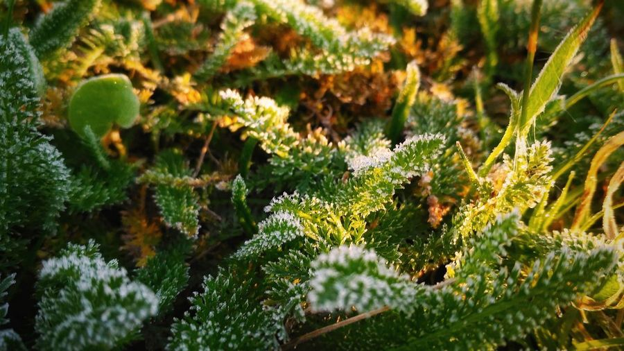 Nature Growth Green Color Plant Beauty In Nature No People Outdoors Day Moss Close-up Focus On Foreground Tranquility Sunlight Grass Freshness