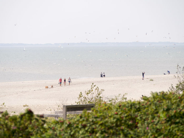 Germany Sea Beach Land Water Group Of People Sky Horizon Nature Real People Horizon Over Water Day Large Group Of People Crowd Sand Beauty In Nature Men Lifestyles Leisure Activity Scenics - Nature Outdoors
