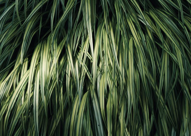 tropical plant background Copy Space Light Shade Abstract Backgrounds Bamboo - Plant Beauty In Nature Botany Close-up Full Frame Green Color Growth Leaf Leaves Nature Outdoors Palm Leaf Palm Tree Plant Plant Part Rainforest Sunlight Tranquility Tropical Climate Tropical Tree