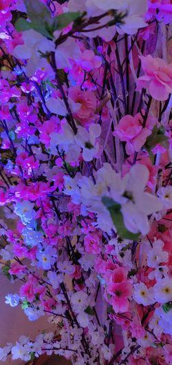 Flower Backgrounds Full Frame Pink Color Close-up Plant