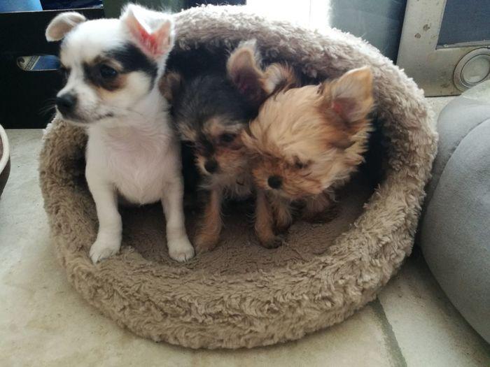 Young Animal Puppy Dog Animal Themes