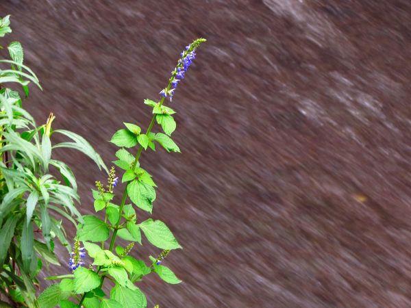 Sola Flores Flowers Canonsx510 Blue River Rio Rioorizaba