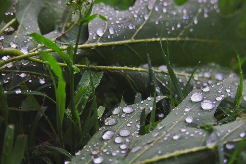 Drop Water Plant Part Leaf Wet Plant Growth Day Vulnerability  No People Green Color Fragility Dew Close-up Beauty In Nature RainDrop Rainy Season Nature Rain Outdoors