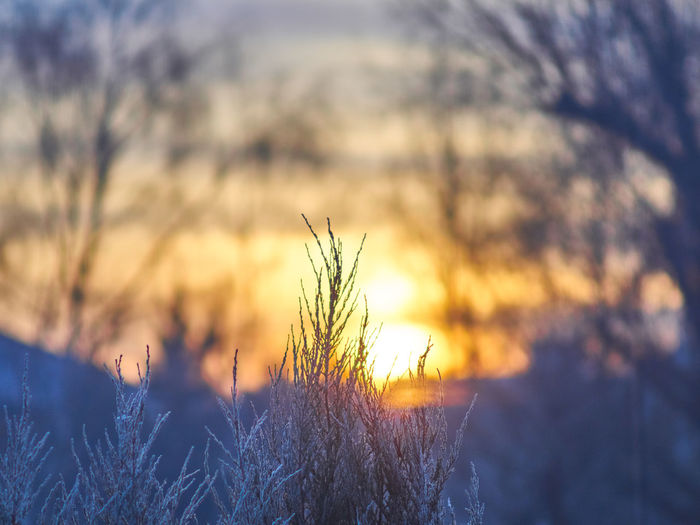 Taken in the morning thru the window Background Beauty In Nature Blue Bokeh Branch Cloud Dawn Landscape Nature No People Outdoors Poland Sky Sunrise Tree Vegetation Window Winter