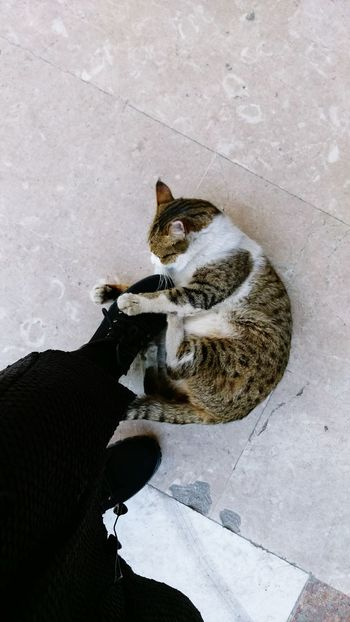 One Animal Domestic Cat Animal Lovely Kindly
