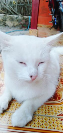 White cat EyeEmNewHere EyeEm Gallery Pets Portrait Feline Domestic Cat Protruding Looking At Camera Lying Down Cold Temperature Winter Relaxation Cat Sleepy At Home