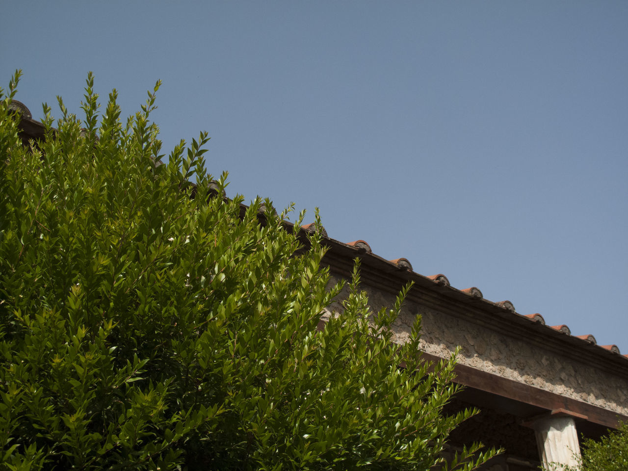 Low Angle View Of Tree Growing By Roof Against Clear Sky