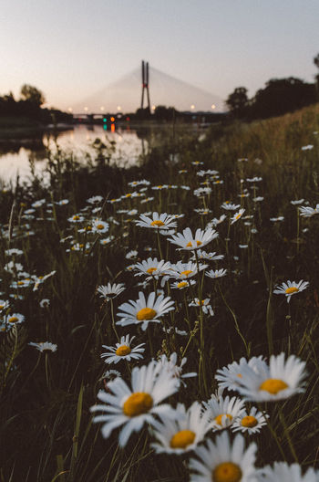 Sunrise Beauty In Nature Blooming Close-up Day Flower Flower Head Fragility Freshness Grass Growth Nature No People Outdoors Plant River Sky Sunset Tranquility Water First Eyeem Photo
