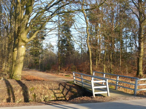 Forest entrance Aurich Ostfriesland Autumn Beauty In Nature Bridge - Man Made Structure Cold Days Day Entrance Gate Entrance Way Forest Forest Trees Forest Walk Growth Litle Bridge Nature No People Outdoors Outside Photography Railing Scenics Sky The Way Forward Tranquility Tree Tree Branches Walking Around Winter Trees
