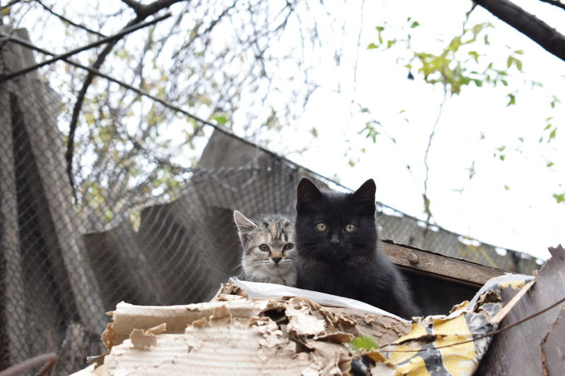 Cats Of EyeEm Kittens Animal Themes Black Kitten Cat Cats Day Domestic Animals Domestic Cat Feline Nature No People Outdoors Pets