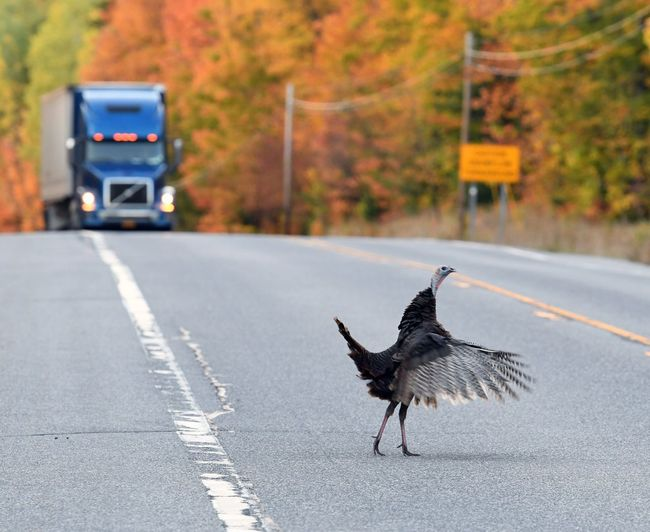 Bird Walking On Road
