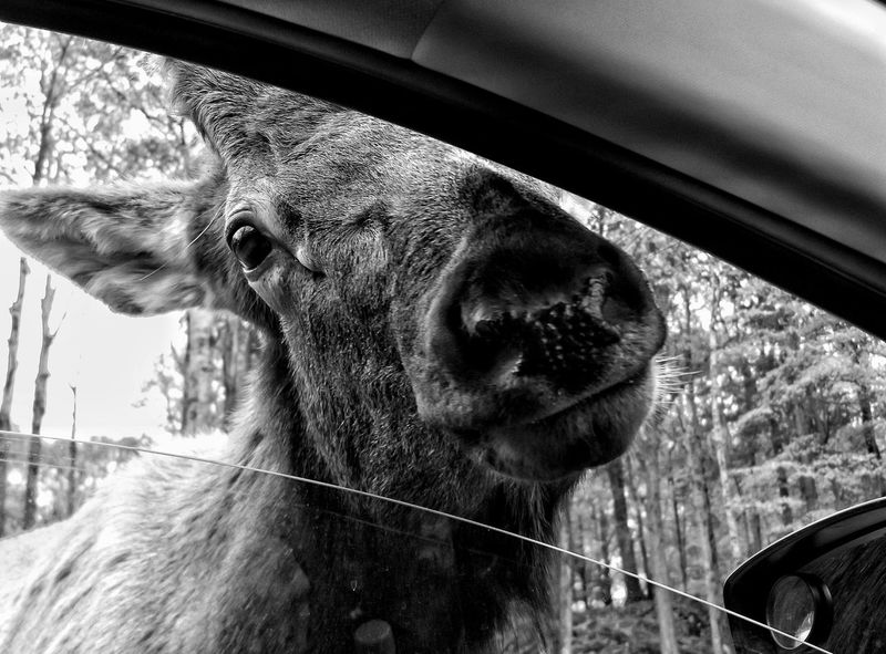 Animal Portrait Capture The Moment Nature Hello World Check This Out Enjoying Life From My Point Of View Awkward Funny EyeEm Nature Lover Funny Moments From My Window Car Perspective EyeEm Best Shots Enjoying The View Monochromatic Travelling Black And White Black & White The Great Outdoors Countryside Relaxing EyeEm Best Shots - Black + White The Moment - 2016 Eyeem Awards