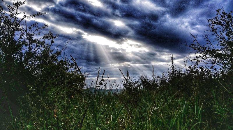 Tree Storm Cloud Sky Grass Cloud - Sky Countryside Dramatic Sky