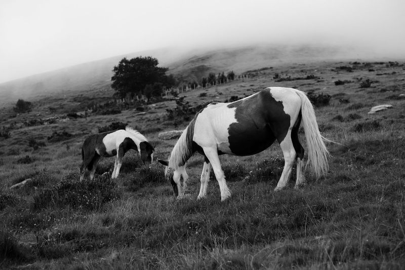 Horses grazing on landscape