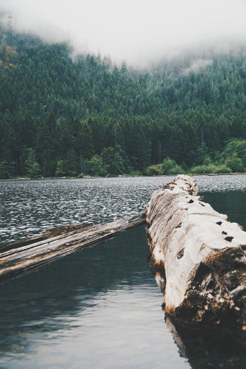 Wood Floating On Lake Against Mountain