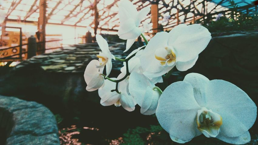Mobilephotography UnderSea Close-up Blooming Bumblebee Orchid Fragility Flower Head Single Flower