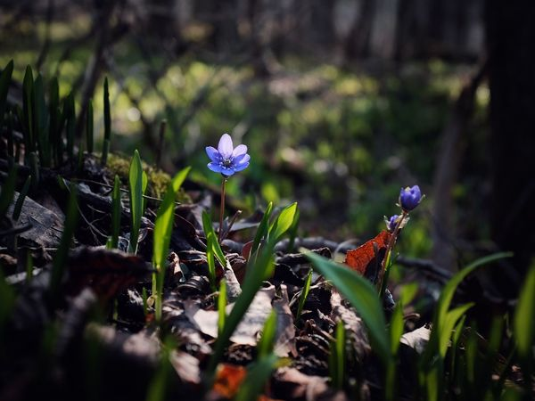 Spring Flowers Omberg Sweden Flower Fragility Close-up Beauty In Nature FujiX100T Nature Hidden Places