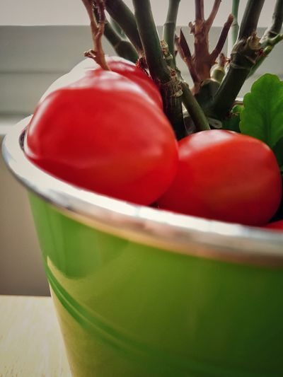 Red Green Color Close-up Food Food Photography Food Display Tomatoes Up Close Tomatoes Plant Plant Part Green Vase Plant Pot Green Pot Freshness Fresh Food Contrasting Colors Red And Green House Kitchen Homely Homely Atmosphere Home Interior Home Lifestyles Healthy Eating