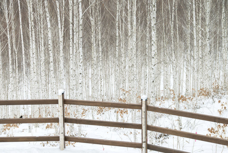 Close-Up Of Railing In Forest During Winter