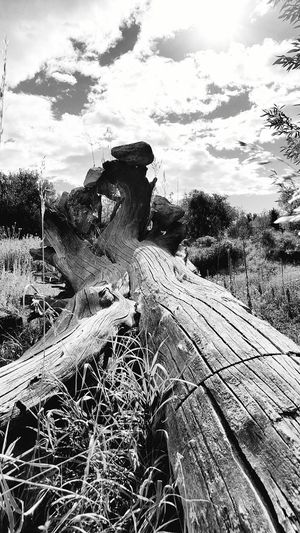 Colorado is full of inspiration. Couldn't resist photographing this scene . Black And White Wilderness Scenic Nature Fort Collins Colorado Sunny Tree Rock Formation Perspective Environment Foothills Outdoors In Nature  Outside