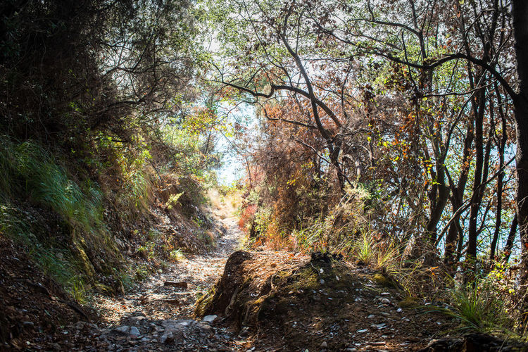 Autumn By The Sea Freshness Green Hiking Plants Portofino Natural Regional Park Trees Abundance Adventure Bushes Forest Italy Leaves Outdoors Park Pathway Tourism Woods