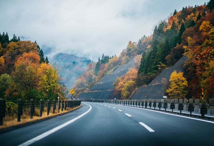 road Japan Autumn Autumn colors Travel Travel Photography Everything Yellow Roadtrip Trip Japanautumn Road The Way Forward Tree Highway Scenics Outdoors Autumn Landscape Mountain Day Beauty In Nature Travel Destinations