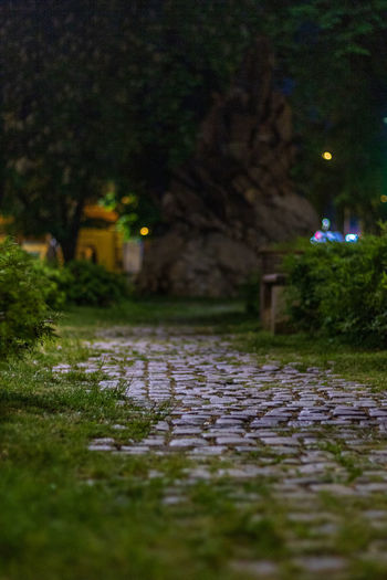 Park Grass Trees Pirot Serbia Paving Street Night Green Cobble Stone Cobblestone Park Dark Pavement Street Photography Building Exterior Plant Architecture No People Tree Selective Focus Nature City Built Structure Footpath Water Direction Outdoors The Way Forward Surface Level Paving Stone The Street Photographer - 2019 EyeEm Awards The Traveler - 2019 EyeEm Awards