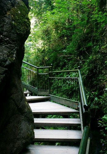 EyeEm Best Shots EyeEmNewHere EyeEm Nature Lover Green Steps Natural Architecture Tree Footbridge Steps And Staircases Steps Staircase Hand Rail Narrow Walkway Pathway First Eyeem Photo