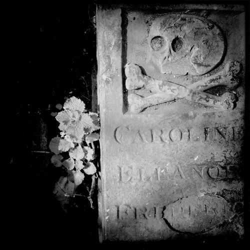 Graveyard Beauty