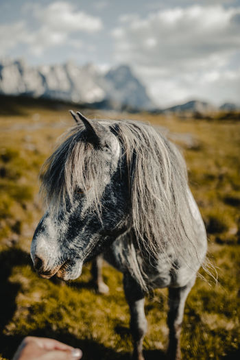 Animal Animal Head  Animal Themes Animal Wildlife Cloud - Sky Day Domestic Domestic Animals Field Focus On Foreground Herbivorous Horse Land Livestock Mammal Mountain Nature No People One Animal Outdoors Pets Pony Sky Vertebrate