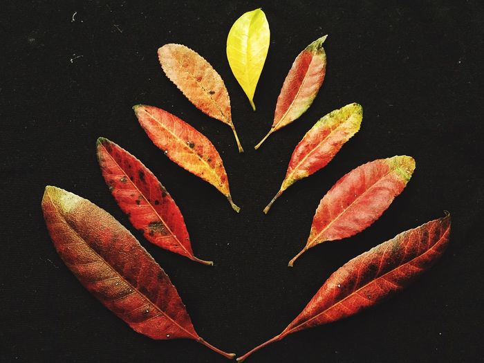 Fall leaves.. IPS2015Fall Leaves Fall Leaves Colorful IPhoneography