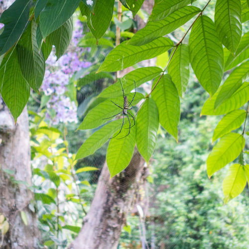 Close-up of fresh green leaves on tree in forest