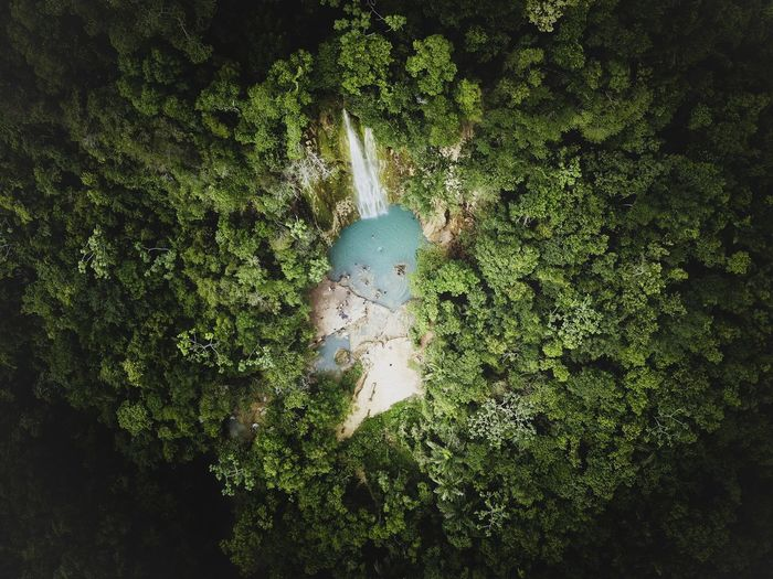 Plant Green Color Growth Nature Tree Day No People Water Forest Beauty In Nature Outdoors Land Plant Part Tranquility High Angle View Leaf Foliage Tranquil Scene Green